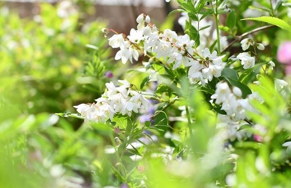 4月の庭 2021_d0025294_15415244.jpg