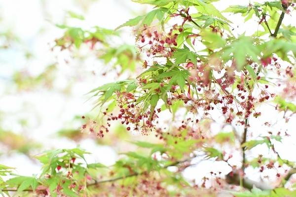 4月の庭 2021_d0025294_15434201.jpg