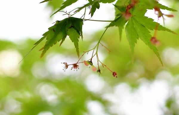 4月の庭 2021_d0025294_15440321.jpg