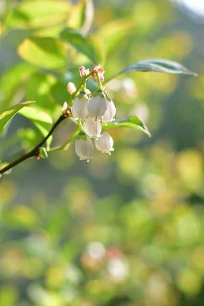 4月の庭 2021_d0025294_15443692.jpg
