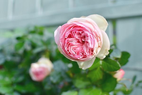 4月の庭 2021_d0025294_15452900.jpg