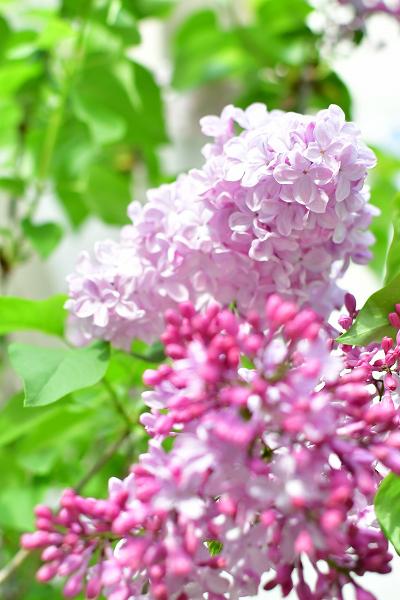 4月の庭 2021_d0025294_17052892.jpg