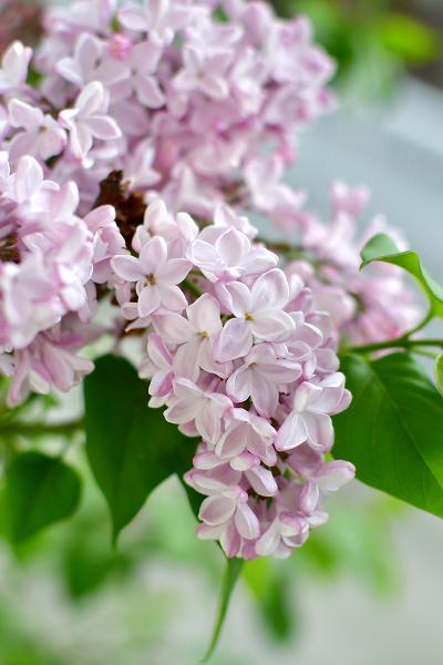 4月の庭 2021_d0025294_17082297.jpg