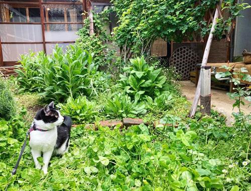 古民家の庭より 〜新緑の季節〜_d0077603_10281621.jpg