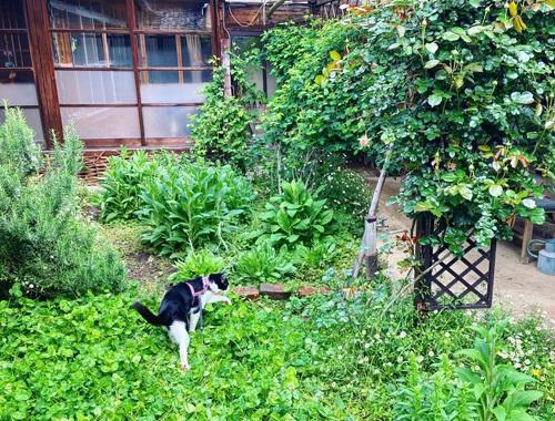 古民家の庭より 〜新緑の季節〜_d0077603_10282707.jpg