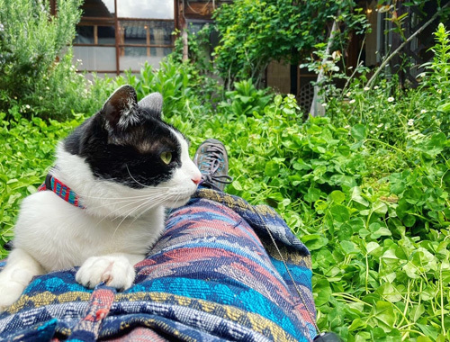 古民家の庭より 〜新緑の季節〜_d0077603_10294476.jpg