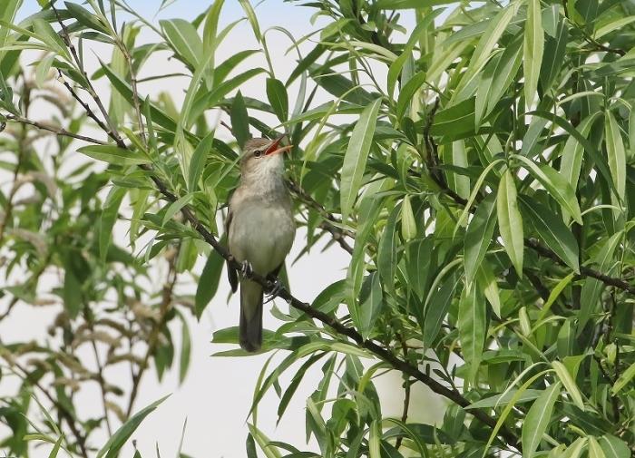 日常探鳥コースにて_d0245529_20361888.jpg
