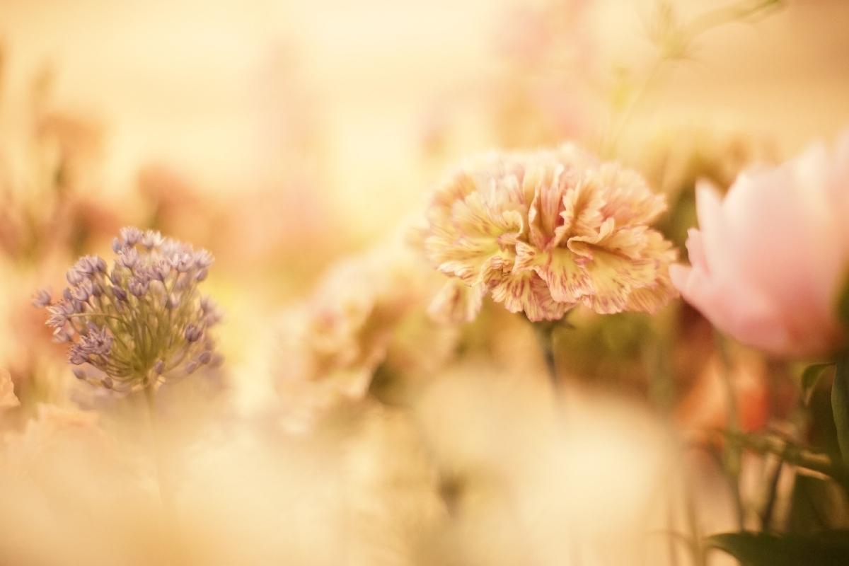 お花も写真も人も _d0086634_14000958.jpg