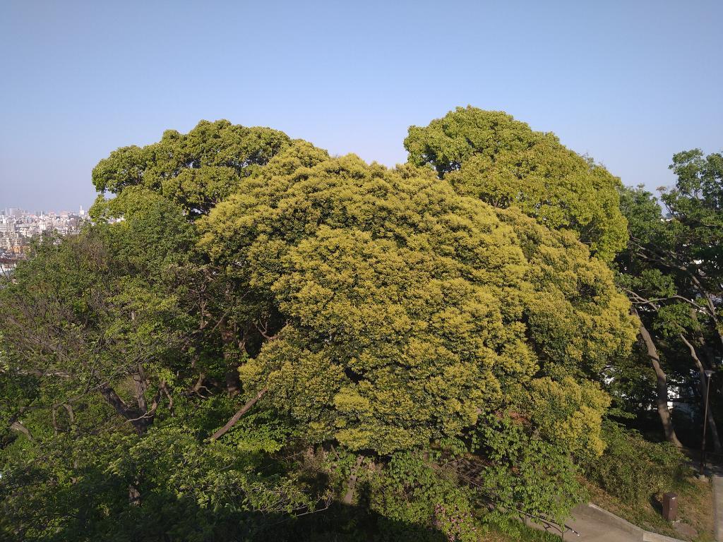 新緑の弘明寺公園、スッキリ_f0379138_18253661.jpg
