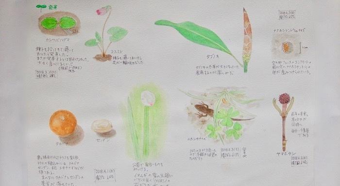 #ネイチャー・スケッチ #Naturejournal #sketch #Watercolor #水彩画 #植物 _a0083553_10325408.jpg
