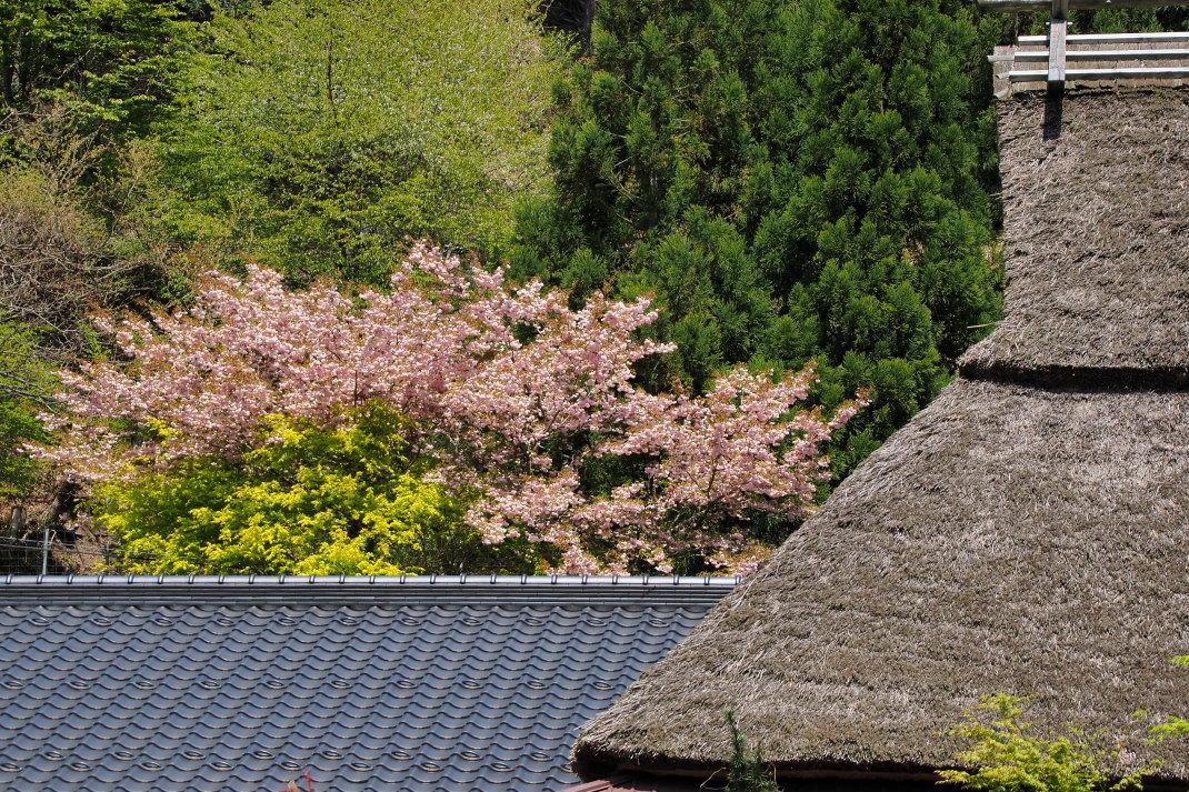 春の美山の里_d0090161_15493542.jpg