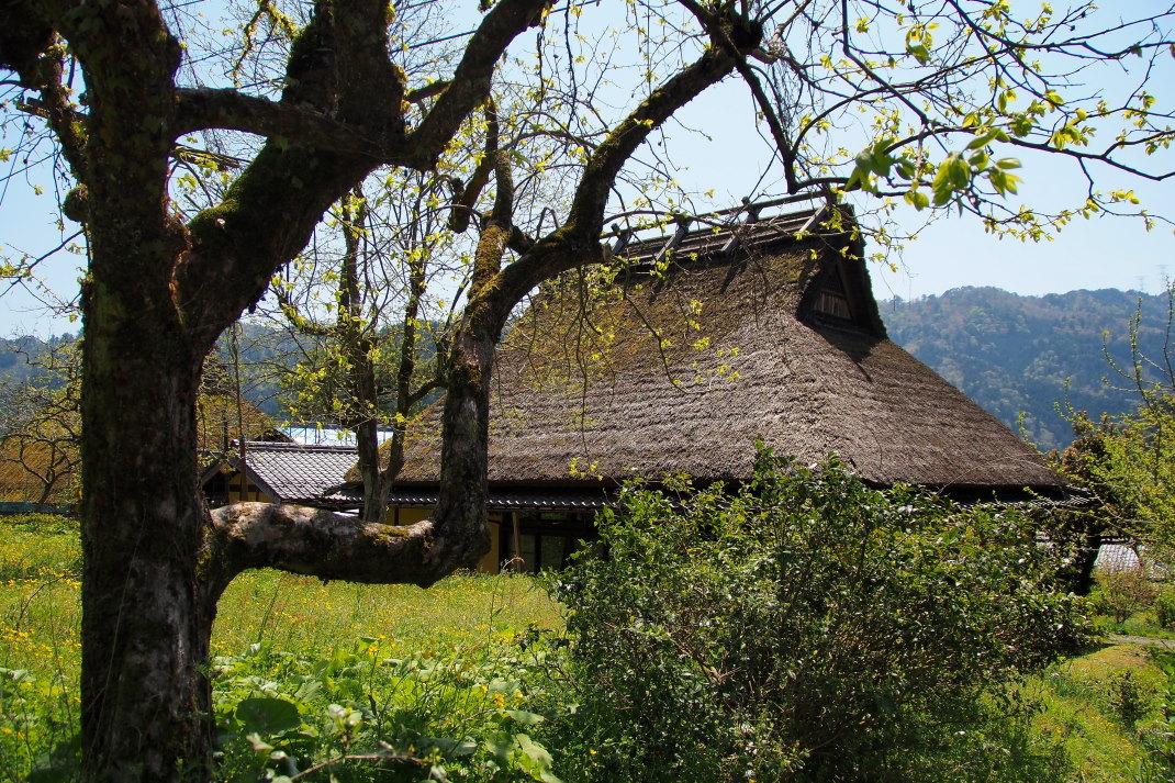 春の美山の里_d0090161_15510821.jpg