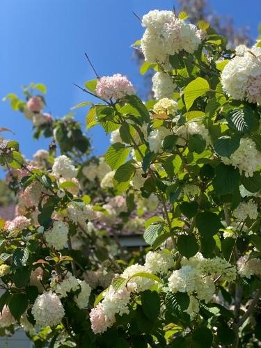 春ですね_f0121167_08182912.jpeg