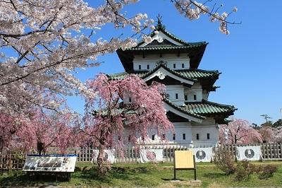 弘前公園桜_2021.04.21撮影_d0131668_18045957.jpg