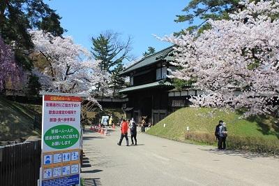 弘前公園桜_2021.04.21撮影_d0131668_18081408.jpg