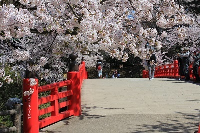 弘前公園桜_2021.04.21撮影_d0131668_18091943.jpg