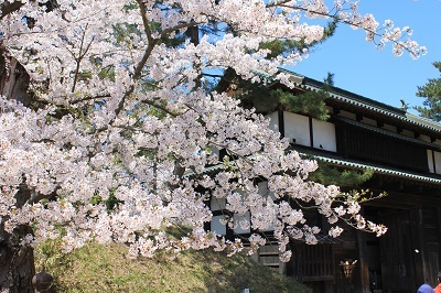 弘前公園桜_2021.04.21撮影_d0131668_18094948.jpg