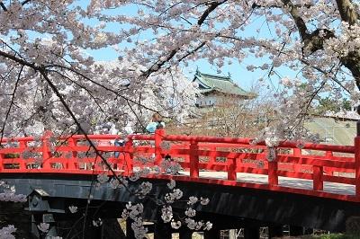 弘前公園桜_2021.04.21撮影_d0131668_18102286.jpg