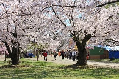 弘前公園桜_2021.04.21撮影_d0131668_18132960.jpg
