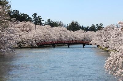 弘前公園桜_2021.04.21撮影_d0131668_18141586.jpg