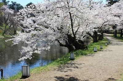 弘前公園桜_2021.04.21撮影_d0131668_18144023.jpg