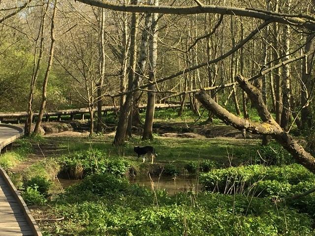 自然公園でウサギちゃんに遭遇!_a0123372_04472996.jpg
