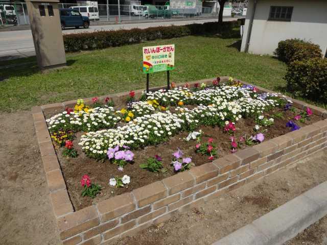 中川口緑地れいんぼーかだん花の植替(地域の方々との協働イベント)を行いました!_d0338682_08460173.jpg