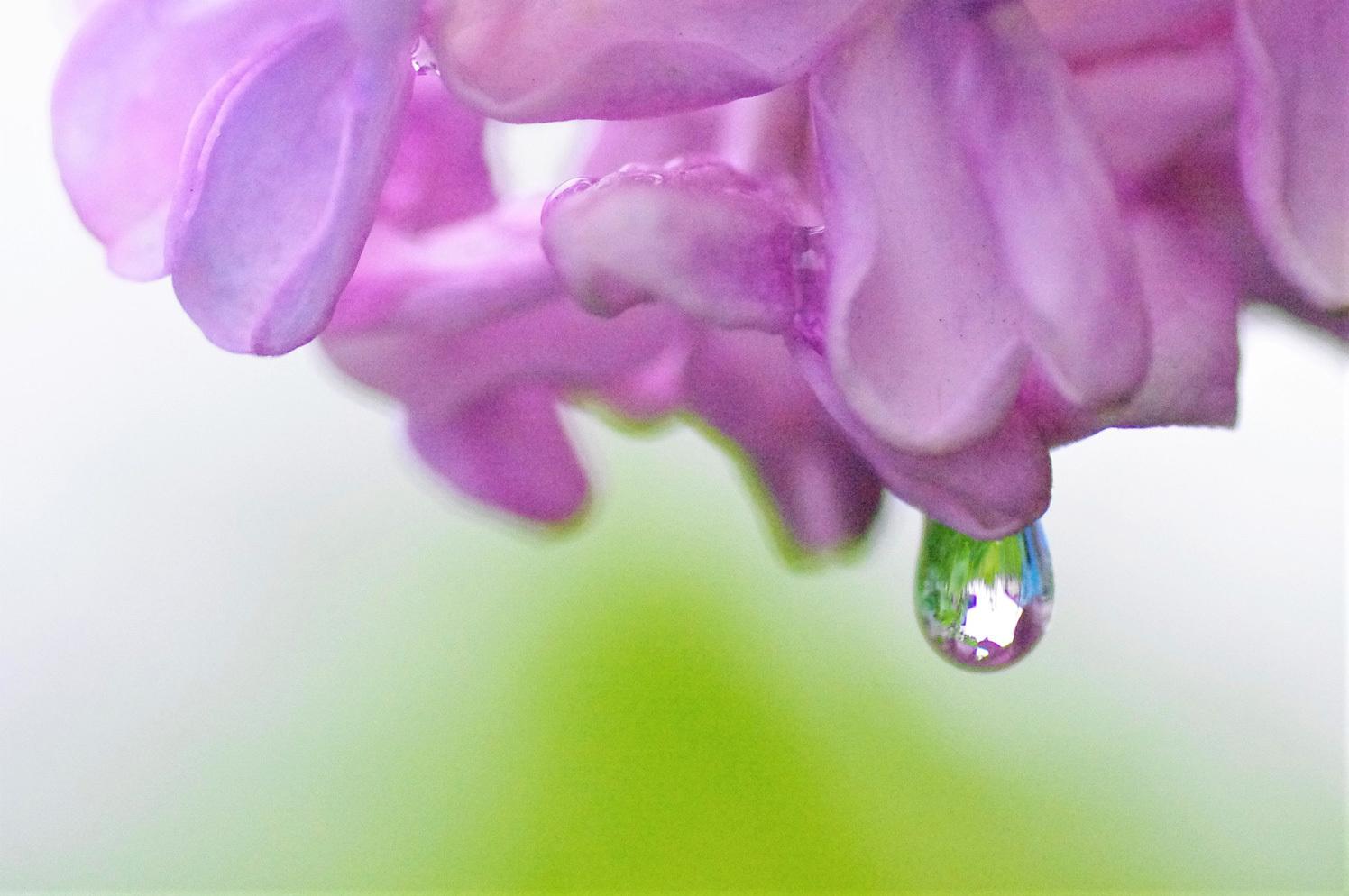 雨のライラックと紫蘭_e0291438_09494356.jpg