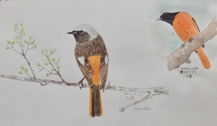 #ネイチャー・スケッチ #Naturejournal #sketch #Watercolor #水彩画 #野鳥_a0083553_15502816.jpg