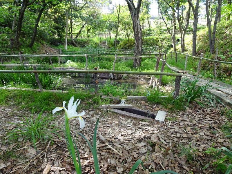 ビオトープの水漏れ補修とササユリ管理・・・うみべの森_c0108460_16372653.jpg