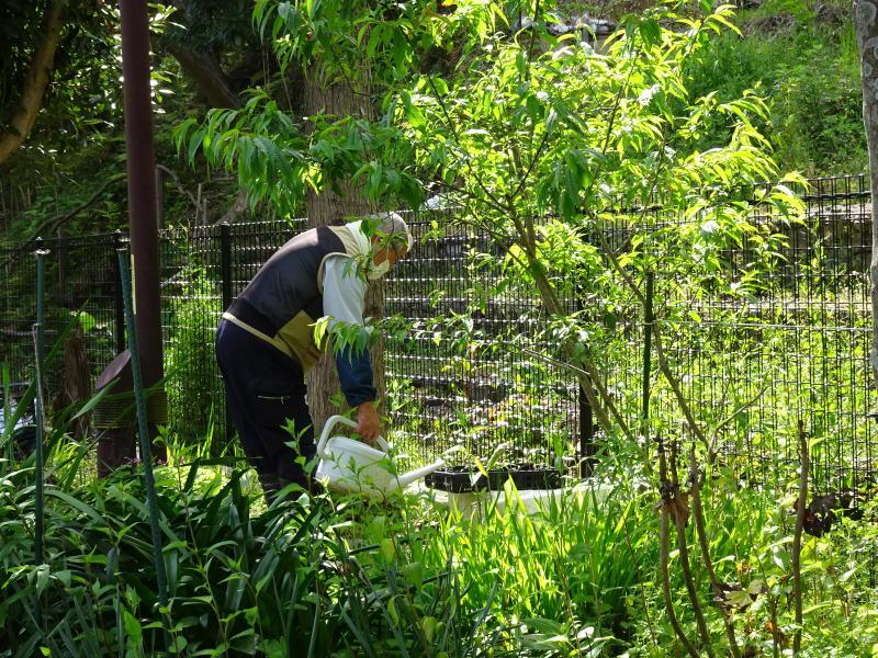 ビオトープの水漏れ補修とササユリ管理・・・うみべの森_c0108460_16372799.jpg