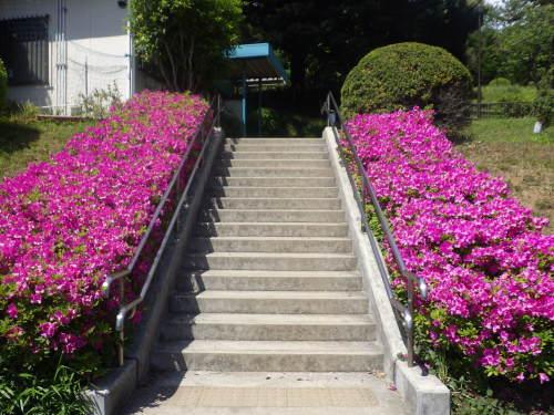 ツツジさん、そんなに急いで咲かなくても…😢_d0173961_13140647.jpg