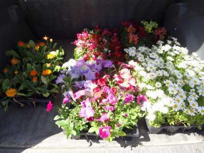 名古屋港水族館前花壇の植栽R3.4.7_d0338682_17500825.jpg