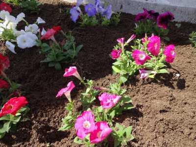 名古屋港水族館前花壇の植栽R3.4.7_d0338682_17502282.jpg