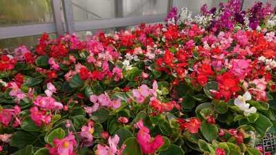 名古屋港水族館前花壇の植栽R3.4.7_d0338682_17522554.jpg