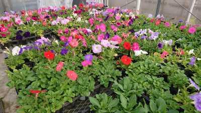 名古屋港水族館前花壇の植栽R3.4.7_d0338682_17523264.jpg