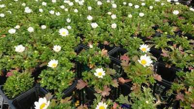 名古屋港水族館前花壇の植栽R3.4.7_d0338682_17523989.jpg