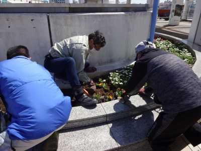 名古屋港水族館前花壇の植栽R3.4.7_d0338682_17540097.jpg