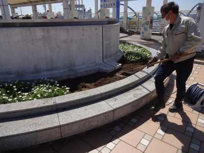 名古屋港水族館前花壇の植栽R3.4.7_d0338682_17541017.jpg