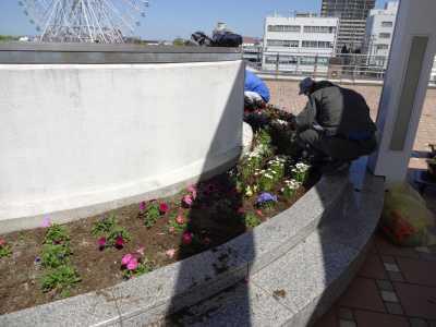 名古屋港水族館前花壇の植栽R3.4.7_d0338682_17542604.jpg