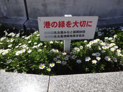 名古屋港水族館前花壇の植栽R3.4.7_d0338682_17544997.jpg
