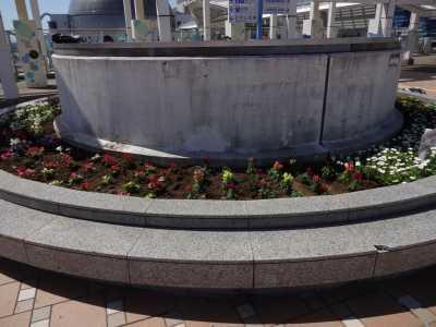 名古屋港水族館前花壇の植栽R3.4.7_d0338682_17550806.jpg