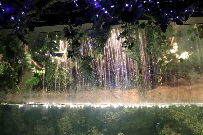 しながわ水族館「世界の大河から」②~コロソマたちは真ん前に集う(August 2020)_b0355317_22093967.jpg