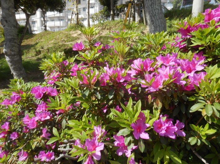 4月23日 美木多幼稚園の様子から_a0212624_13583414.jpg