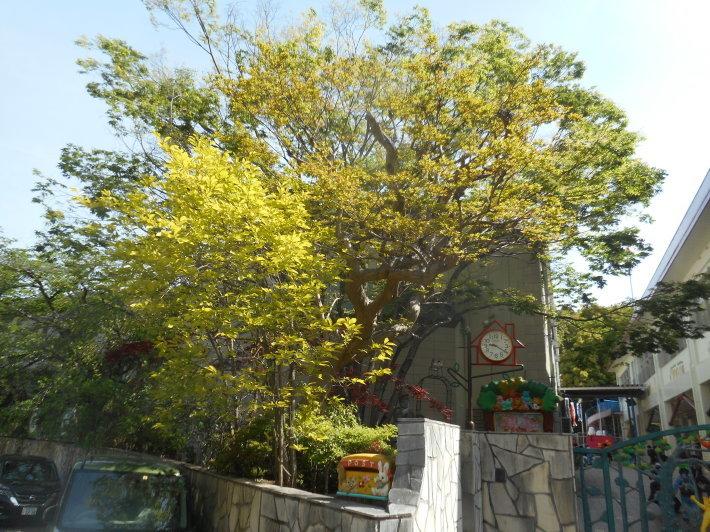 4月23日 美木多幼稚園の様子から_a0212624_13584185.jpg