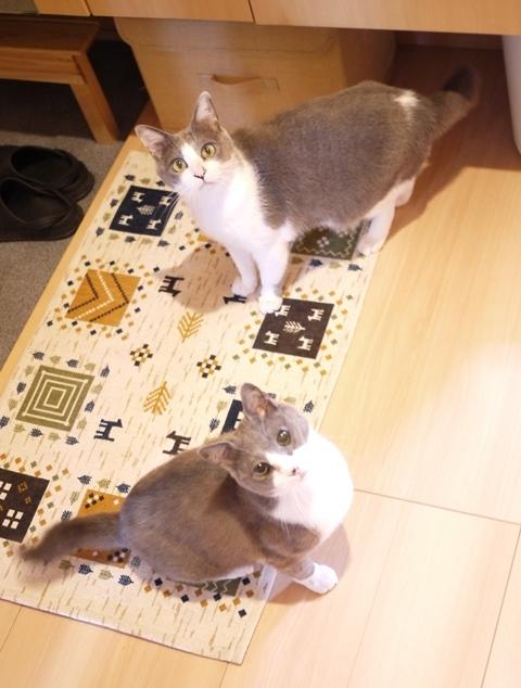 猫のお留守番 赤福くん伊賀丸くん編。_a0143140_22514635.jpg