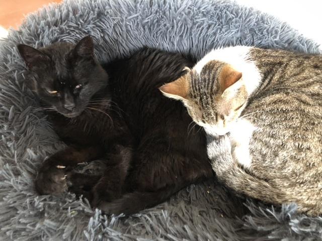 猫の近況_d0136540_02472923.jpeg