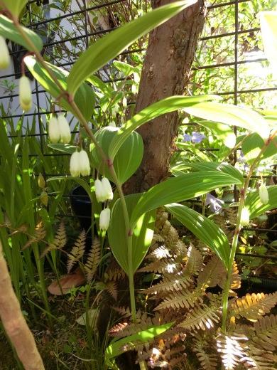 お庭の隅に咲く花_f0226671_21443442.jpg