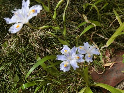 お庭の隅に咲く花_f0226671_23021998.jpg