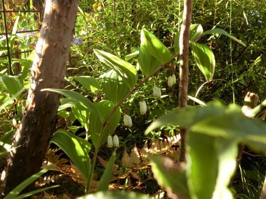 お庭の隅に咲く花_f0226671_23070421.jpg